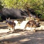 Eita que eu postei uma foto de Sydney mais cedohellip
