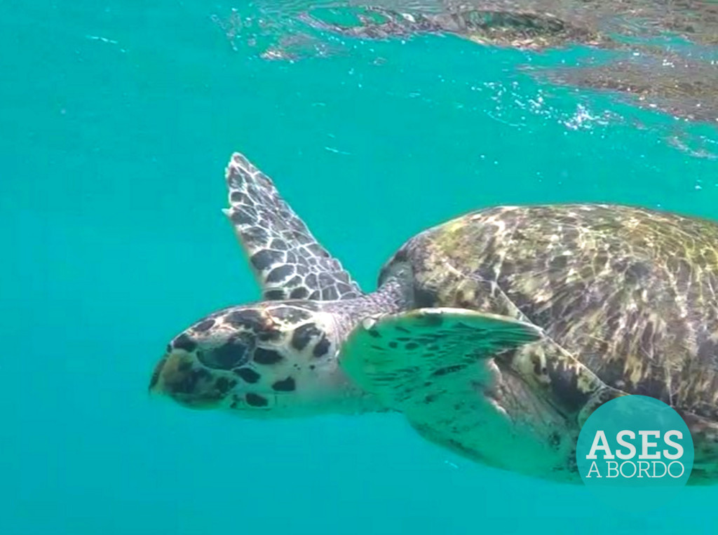 Ases a Bordo nadando com as tartarugas