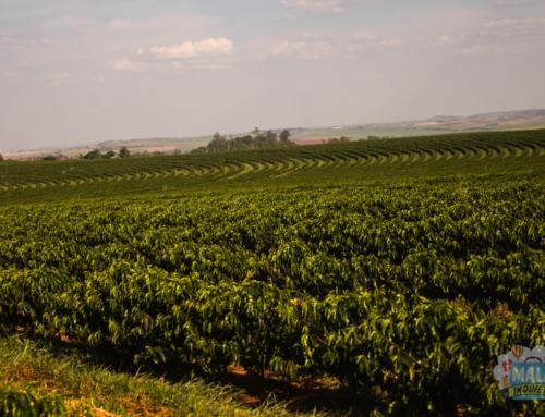 Rota do Café: Fazenda Palmeira (Santa Mariana – Paraná)