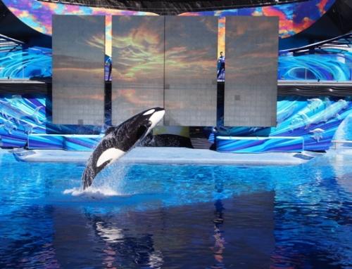 O que você sabe sobre o SeaWorld e sobre o Busch Gardens ?