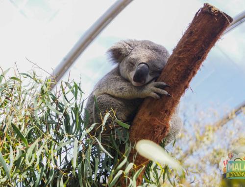 Wild Life Sydney Zoo – Australia