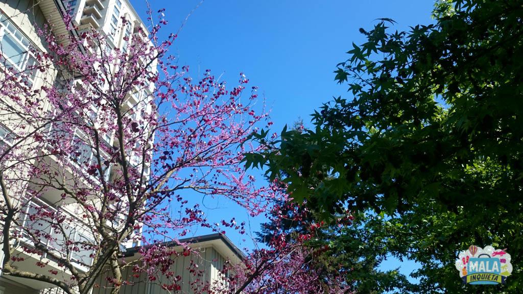 Cores nas ruas é a marca da primavera - Foto: Renata Luppi