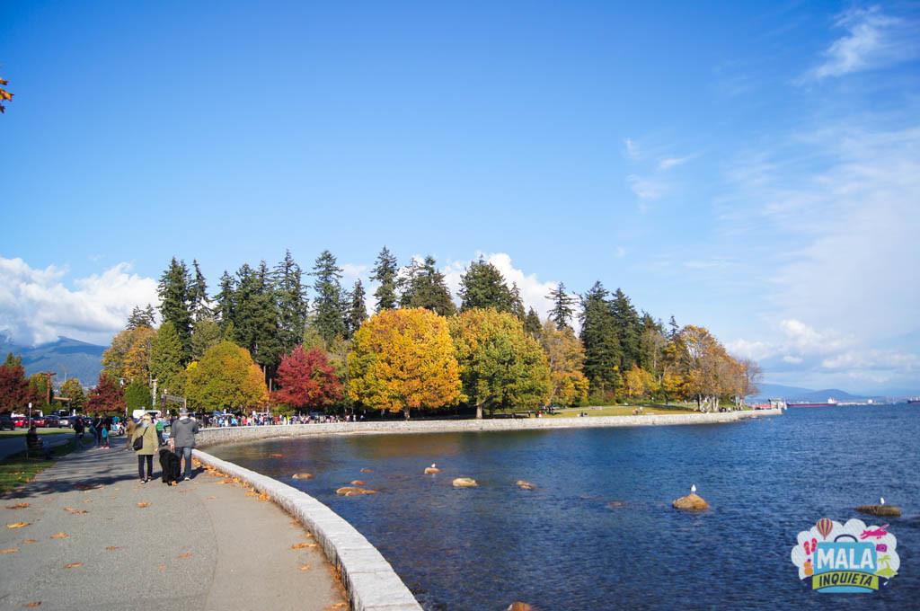 Árvores no Stanley Park - Foto: Renata Luppi