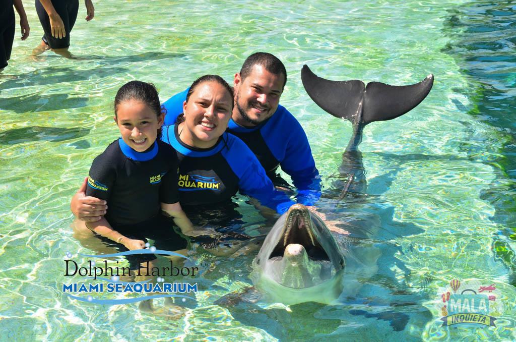 Nadando com os golfinhos no Miami Seaquarium - Foto: Mala Inquieta