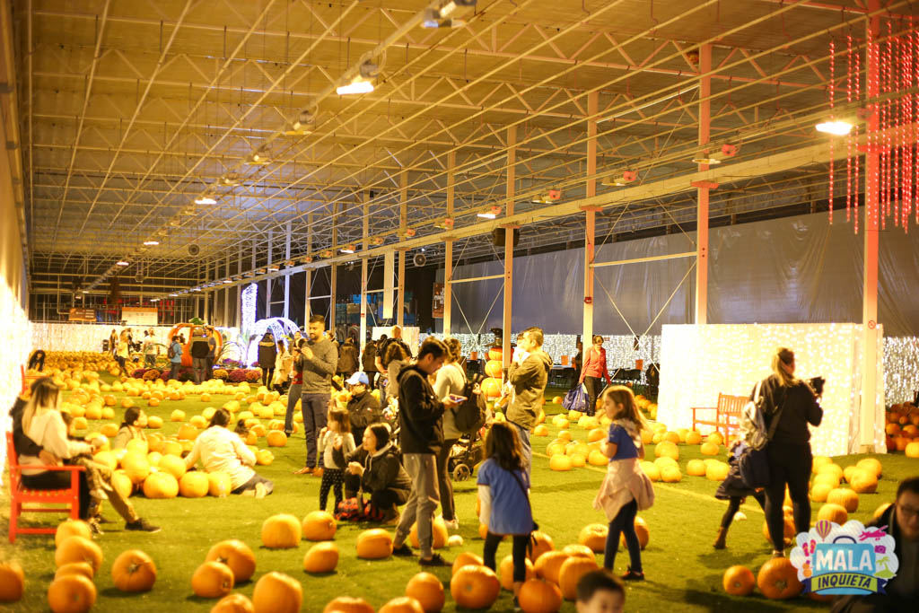 Pumpkin Path no Harvest Glow | Foto: Renata Luppi